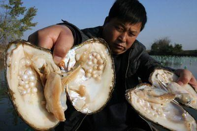 高速上掉一包硫酸铜 附近鱼塘大量鱼类河蚌死亡