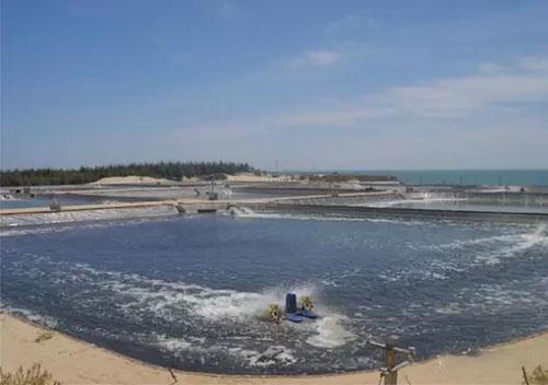 池塘微生态制剂水质调控技术