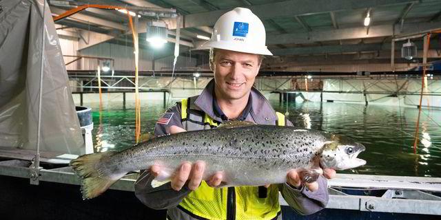 Atlantic Sapphire公司在迈阿密养殖场损失约50万尾鲑鱼